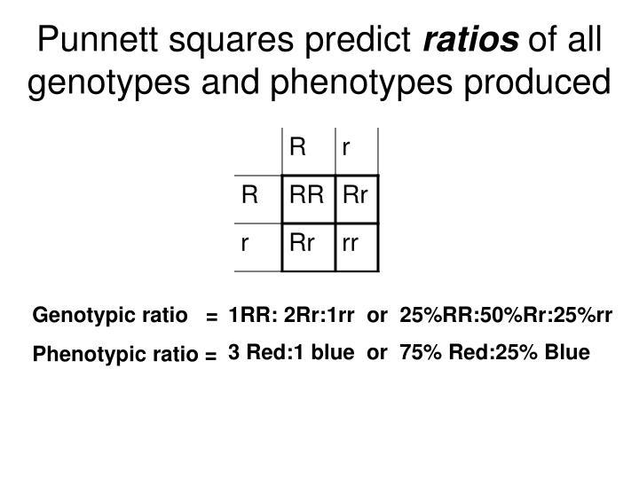 Punnett squares predict