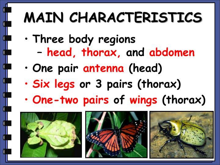 MAIN CHARACTERISTICS