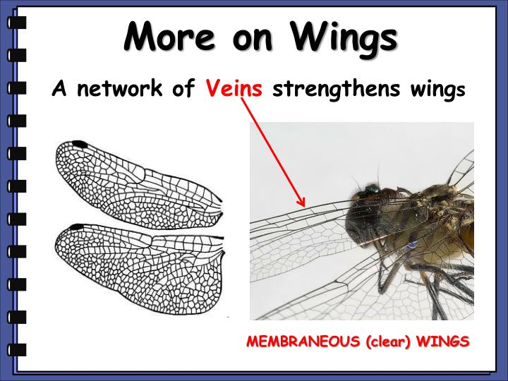 More on Wings
