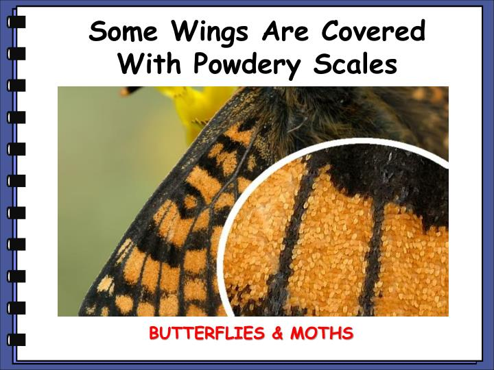 Some Wings Are Covered With Powdery Scales