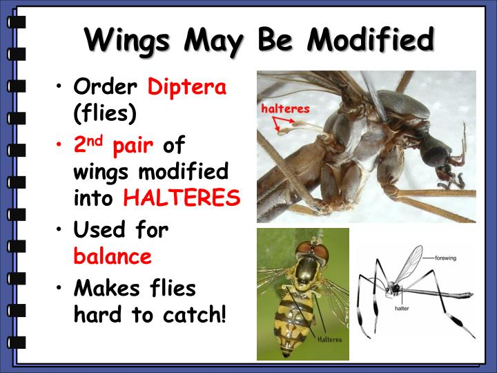 Wings May Be Modified
