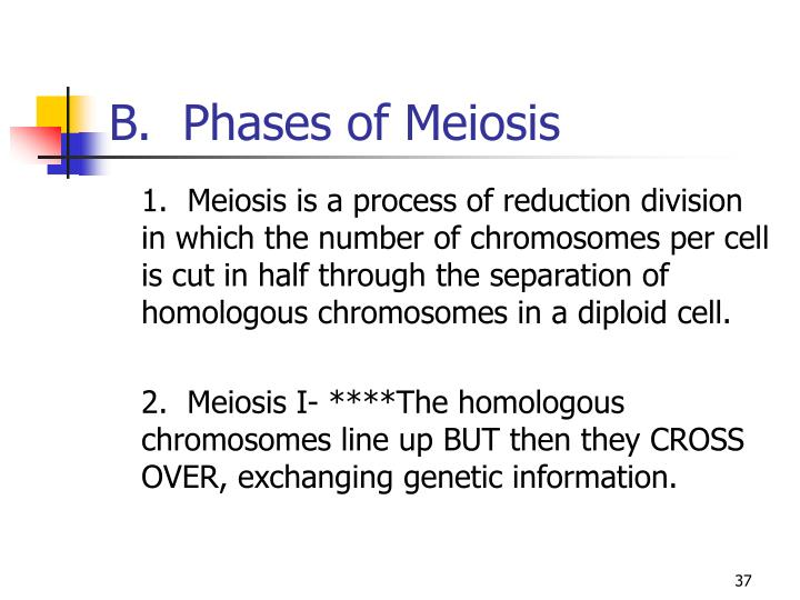 B.  Phases of Meiosis