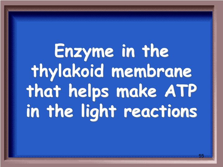 Enzyme in the thylakoid membrane that helps make ATP in the light reactions