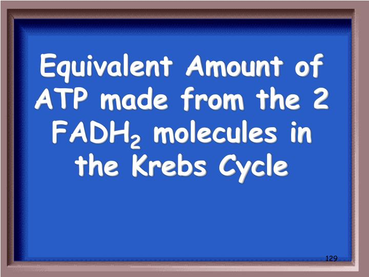 Equivalent Amount of ATP made from the 2 FADH