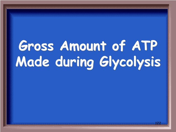Gross Amount of ATP Made during Glycolysis