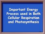 important energy process used in both cellular respiration and photosynthesis