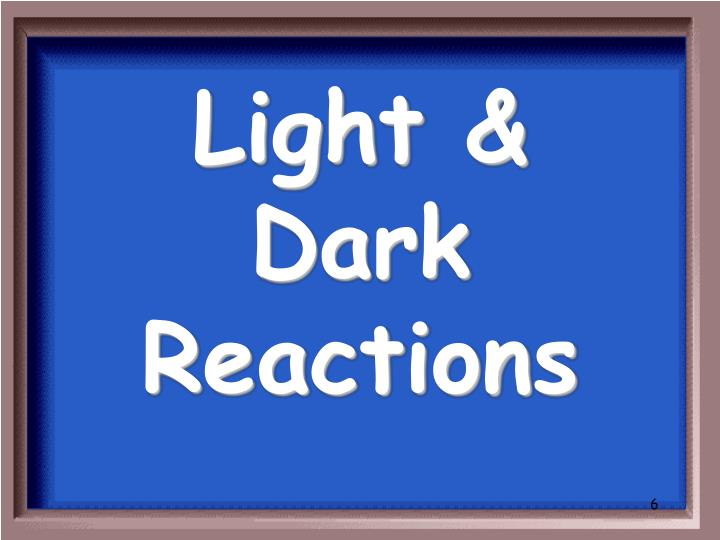 Light & Dark Reactions