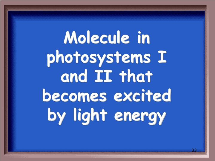 Molecule in photosystems I and II that becomes excited by light energy