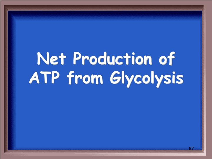 Net Production of ATP from Glycolysis