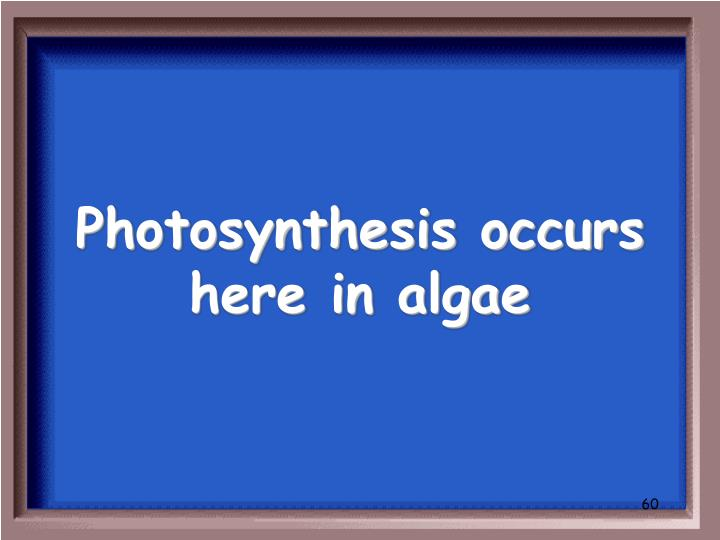 Photosynthesis occurs here in algae