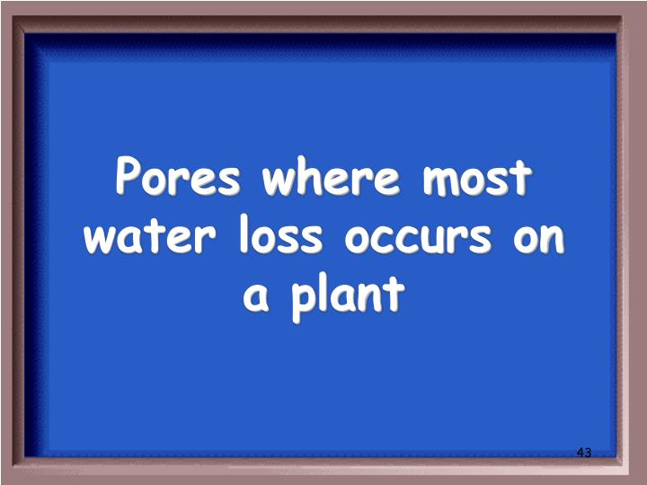 Pores where most water loss occurs on a plant