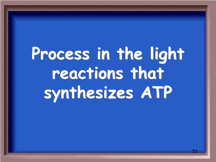 Process in the light reactions that synthesizes ATP