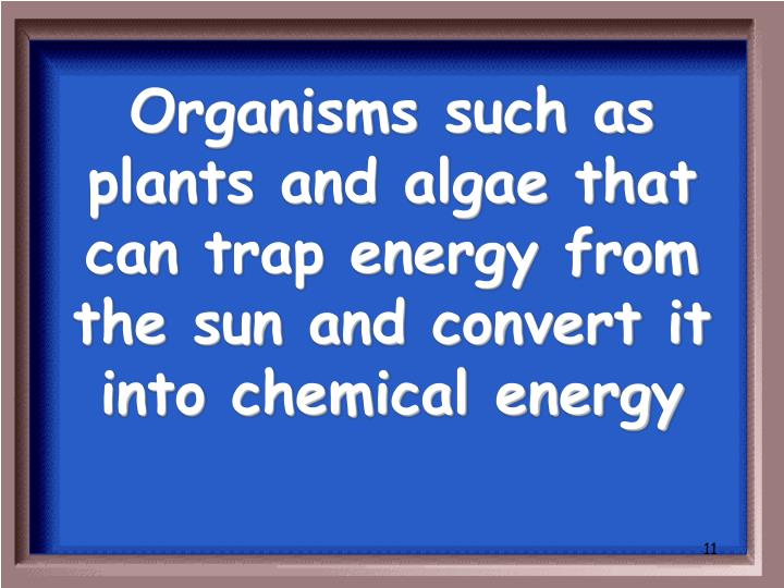 Organisms such as plants and algae that can trap energy from the sun and convert it into chemical energy