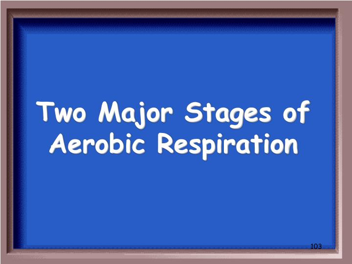 Two Major Stages of Aerobic Respiration