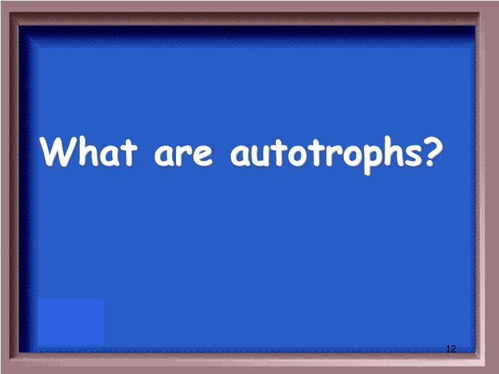 What are autotrophs?