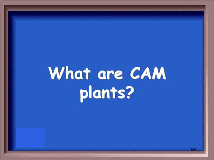 What are CAM plants?