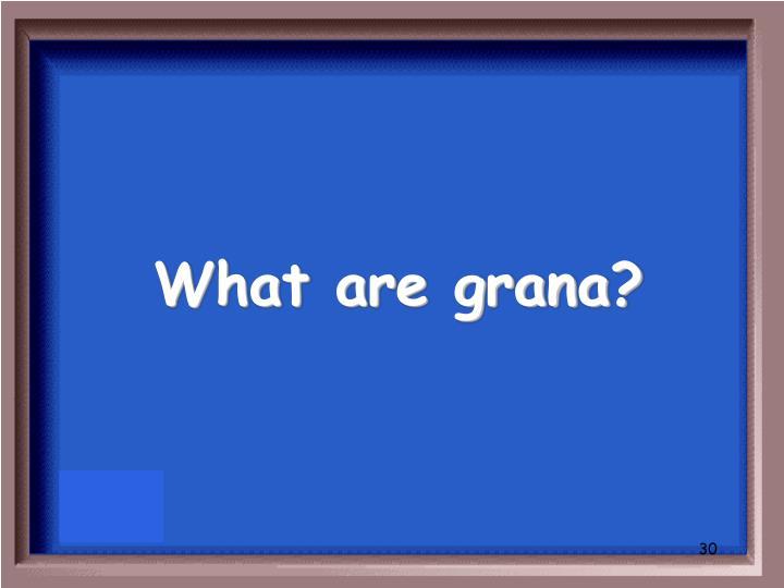 What are grana?