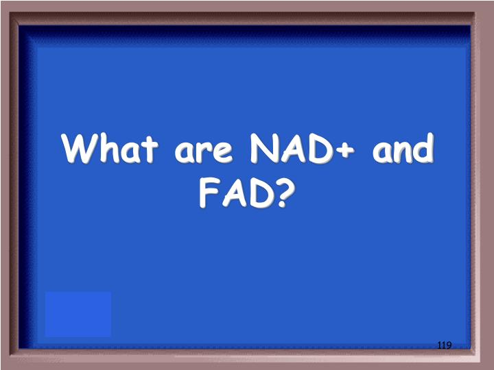 What are NAD+ and FAD?