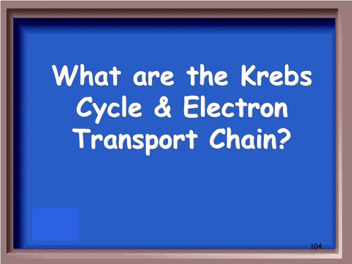 What are the Krebs Cycle & Electron Transport Chain?