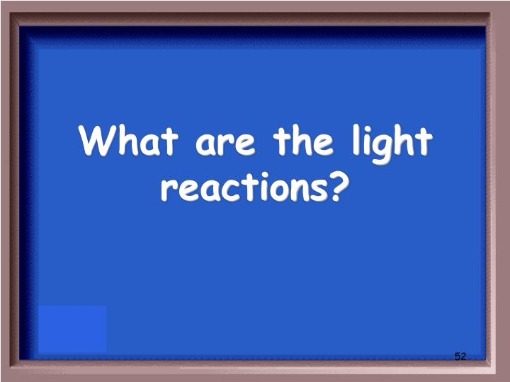 What are the light reactions?