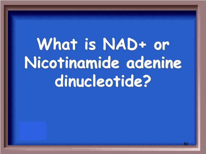 What is NAD+ or Nicotinamide adenine dinucleotide?