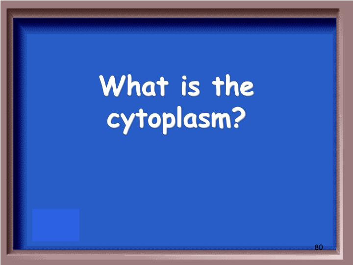 What is the cytoplasm?