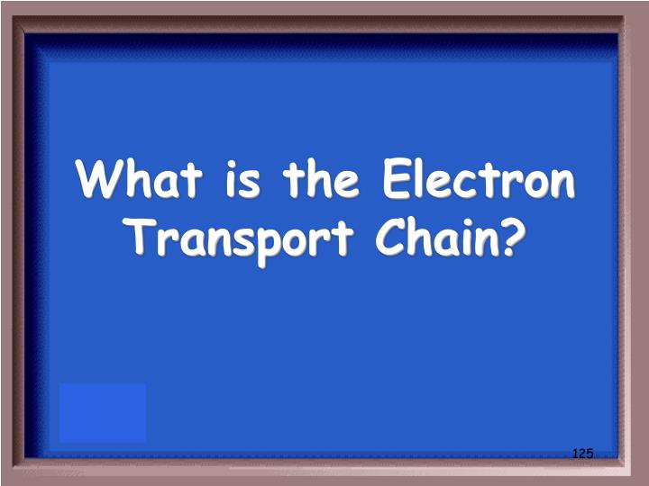 What is the Electron Transport Chain?