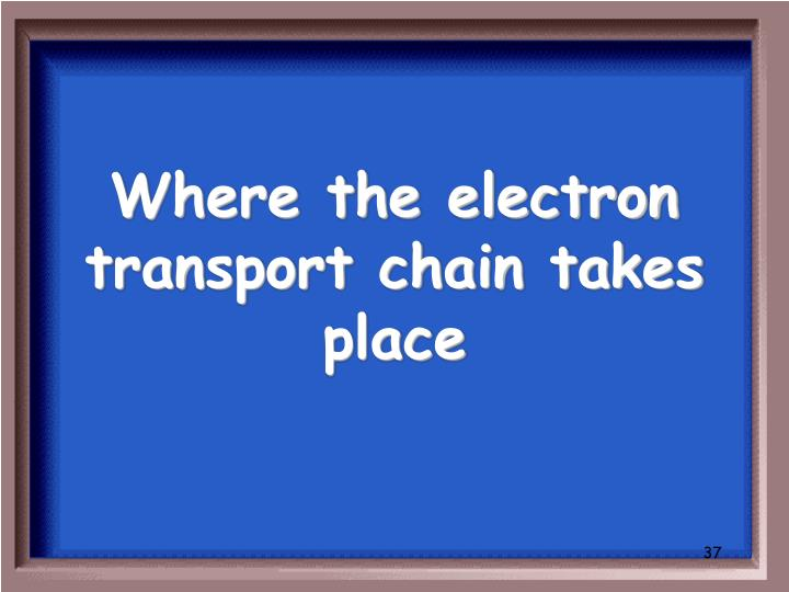 Where the electron transport chain takes place