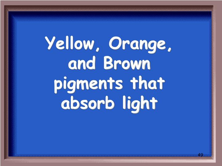 Yellow, Orange, and Brown pigments that absorb light