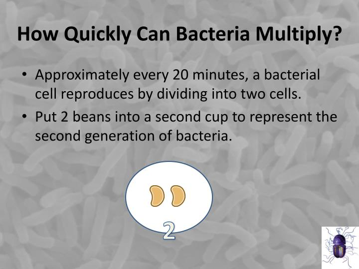 How quickly can bacteria multiply1
