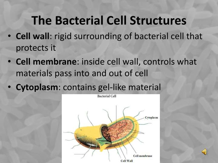 The Bacterial Cell Structures