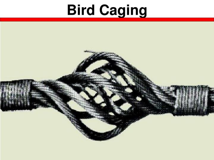 Bird Caging