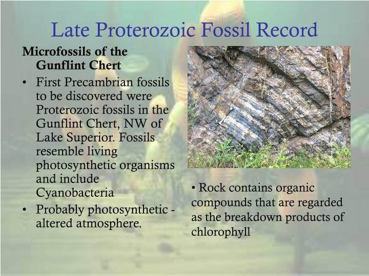 Late Proterozoic Fossil Record