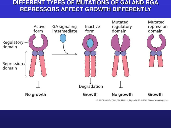 DIFFERENT TYPES OF MUTATIONS OF GAI AND RGA REPRESSORS AFFECT GROWTH DIFFERENTLY
