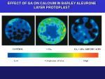 effect of ga on calcium in barley aleurone layer protoplast
