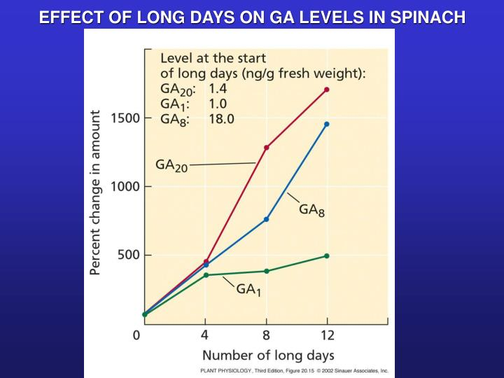 EFFECT OF LONG DAYS ON GA LEVELS IN SPINACH