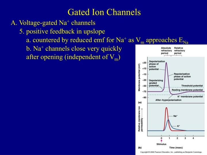 Gated Ion Channels