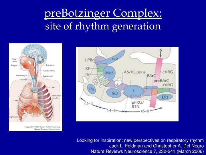preBotzinger Complex:
