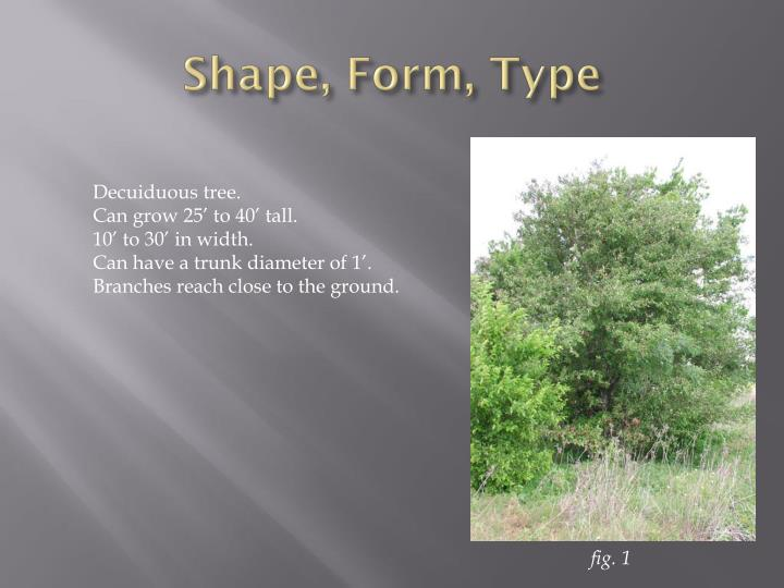 Shape form type