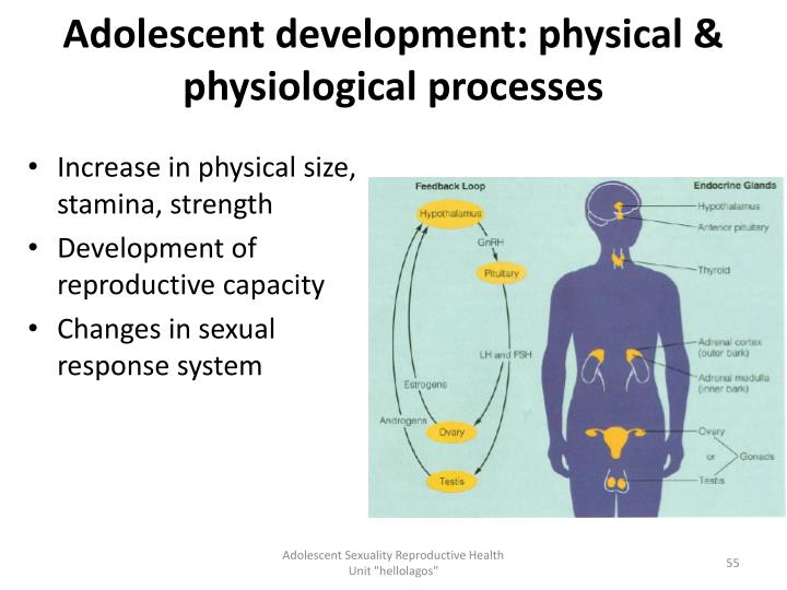 Adolescent development: physical & physiological processes