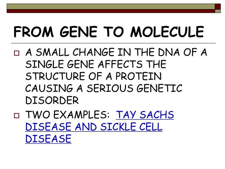 FROM GENE TO MOLECULE