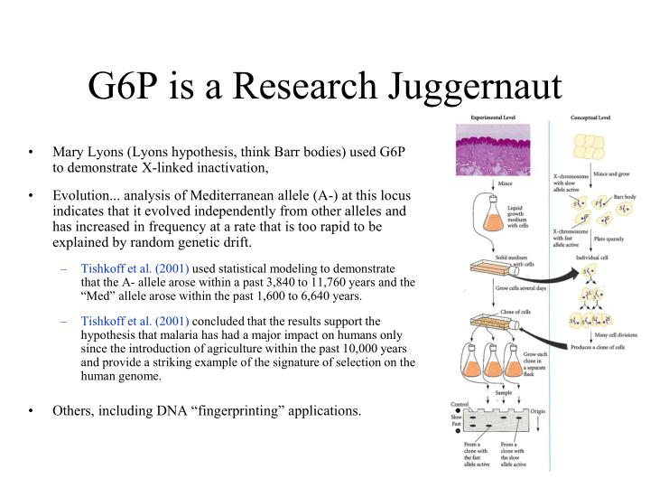 G6P is a Research Juggernaut