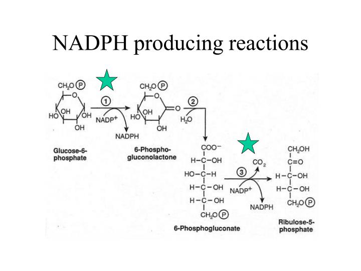 NADPH producing reactions