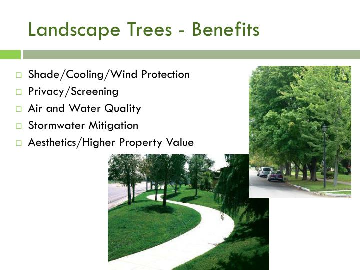Landscape Trees - Benefits