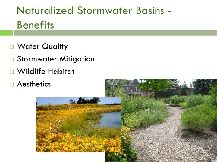 Naturalized Stormwater Basins - Benefits