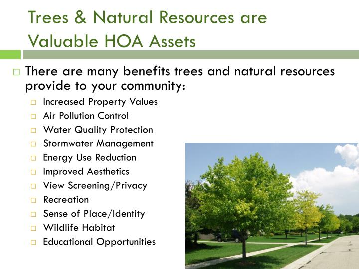 Trees & Natural Resources are Valuable HOA Assets