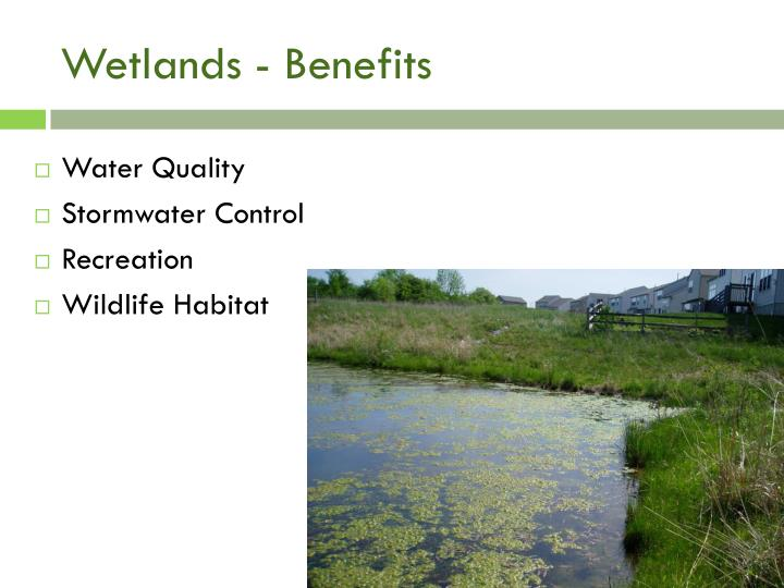Wetlands - Benefits