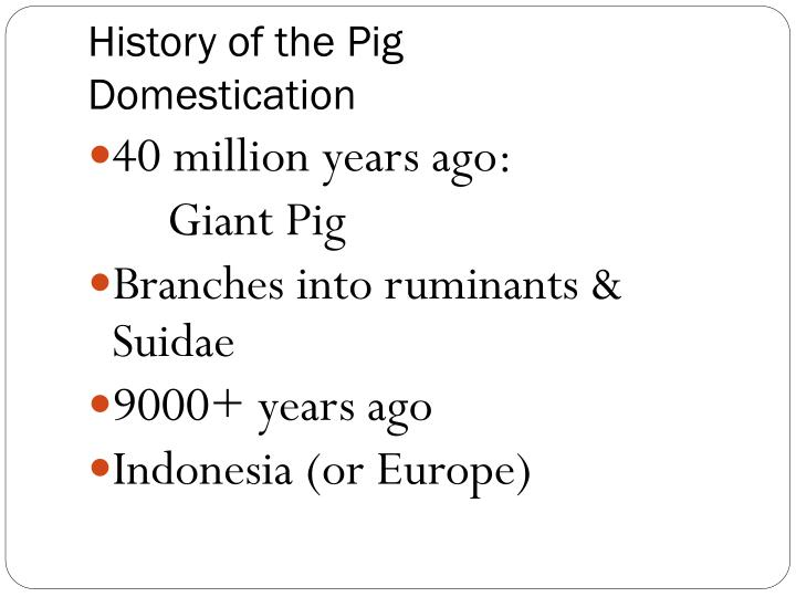 History of the Pig