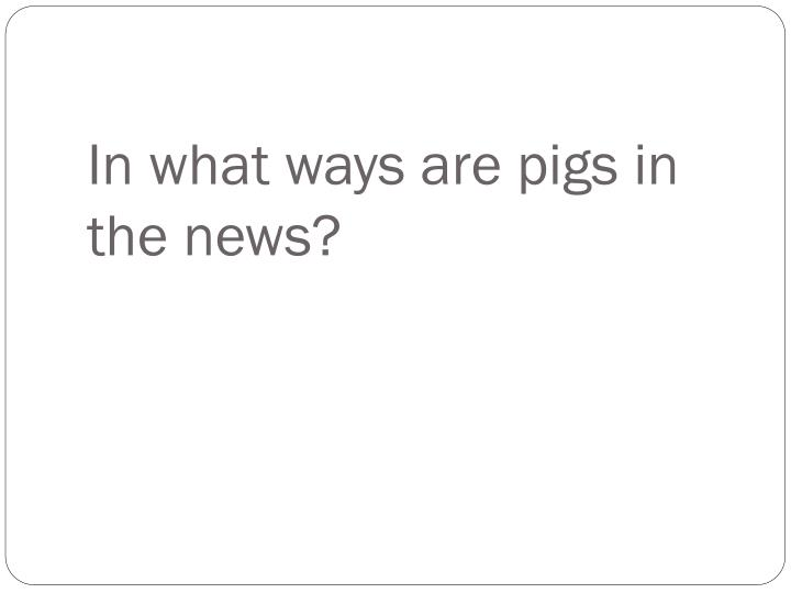 In what ways are pigs in the news