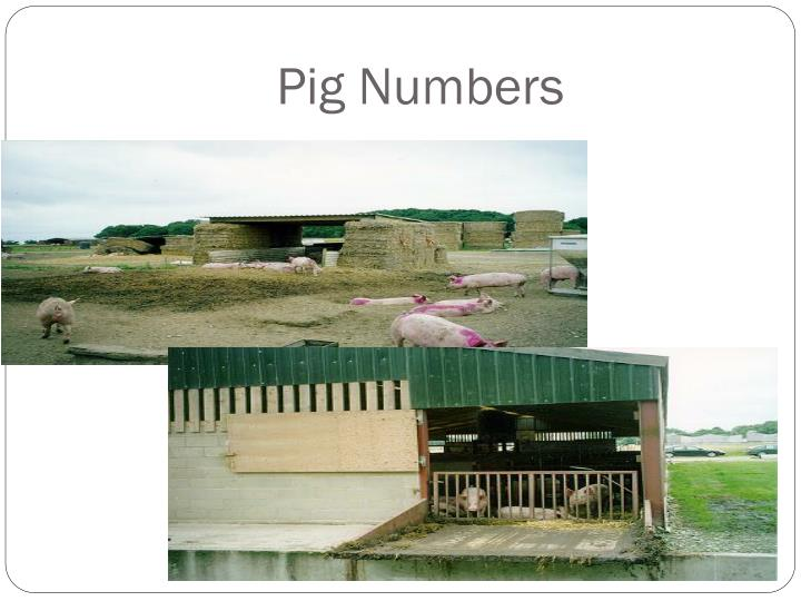 Pig Numbers